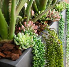 lou de castellane cactus, aloe and vegetal plant
