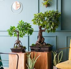 lou de castellane bonsai