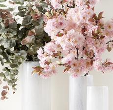 cerisier eucalyptus