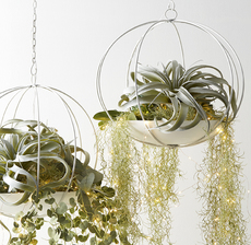suspensions boule tillandsia