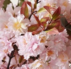 cerisier zoom