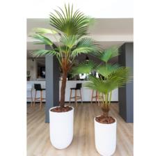 lou de castellane palm and flowerpot