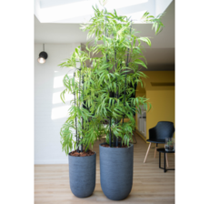 lou de castellane bambou and flowerpot