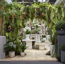 arche vegetale