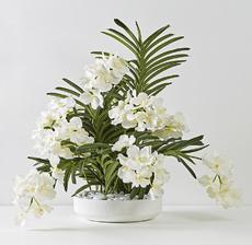 plateau orchidee blanc