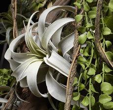 lou_de_castellane_artificielles_artificial_artificiale_fleurs_flowers_fiore_flor_plante_plant_tillandsia