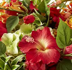 bouquet kniphophia zoom