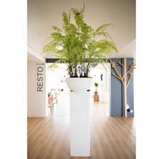 lou de castellane fern tree and exterior plant column