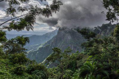 rain-forest-western-usambara-mountains-near-lushoto-tanzania