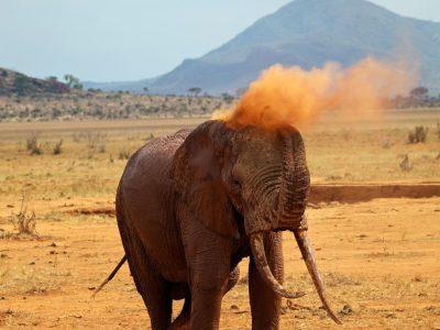 school_expedition_tanzania_impact_elephant_on_safari