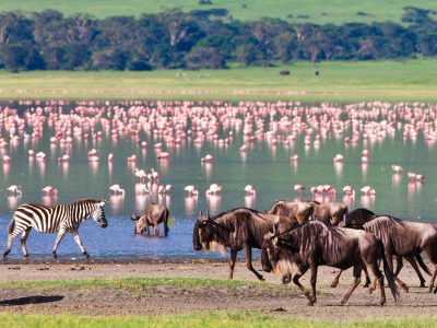 school_expedition_tanzania_impact_wilderbeest__flamingo