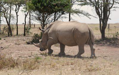 camps_international_ziwa_uganda_wildlife_projects