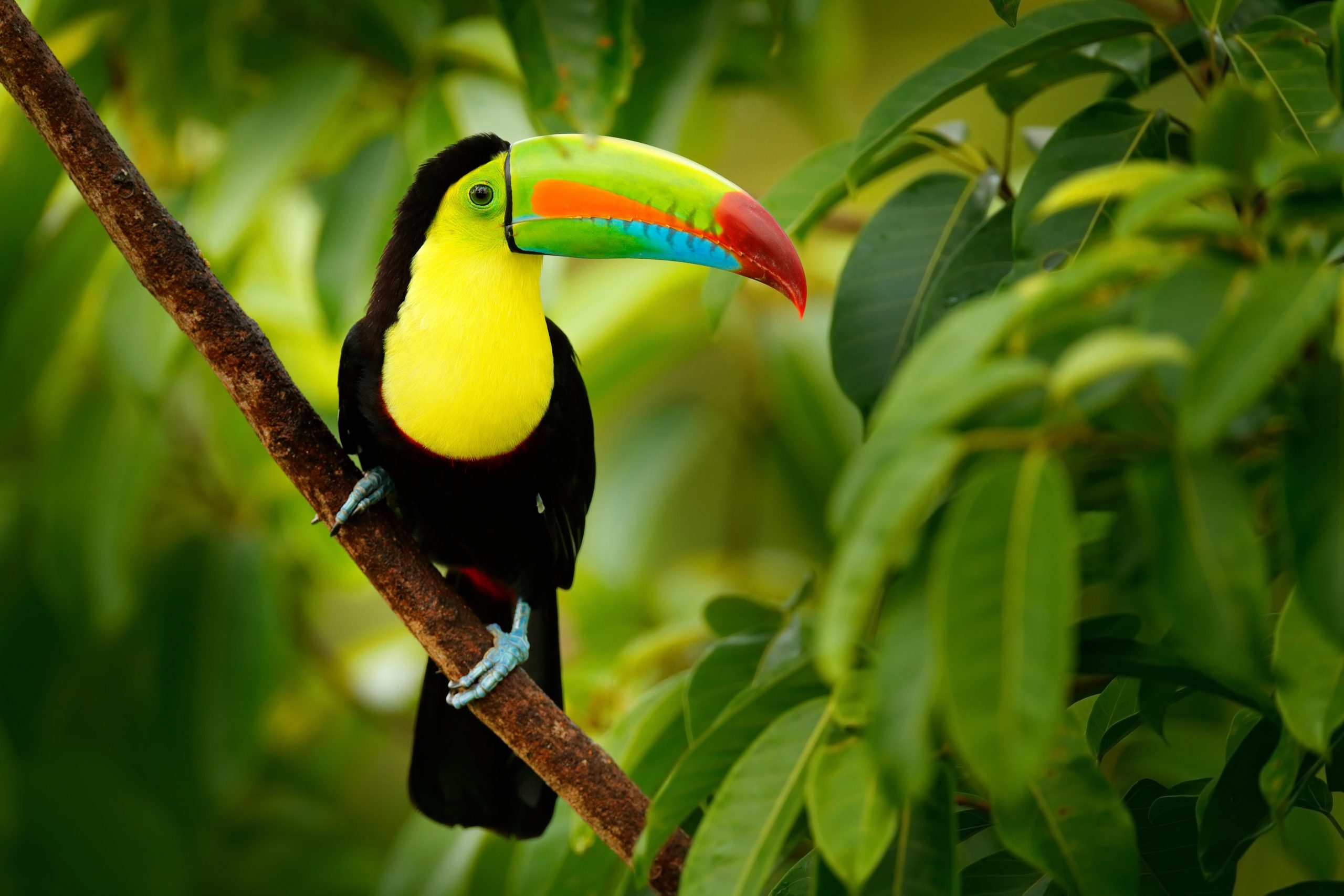 school_expedition_costa_rica_scuba_toucan