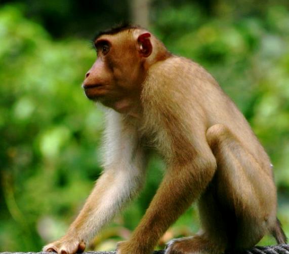 school_expedition_borneo_trek_monkey_on_rope