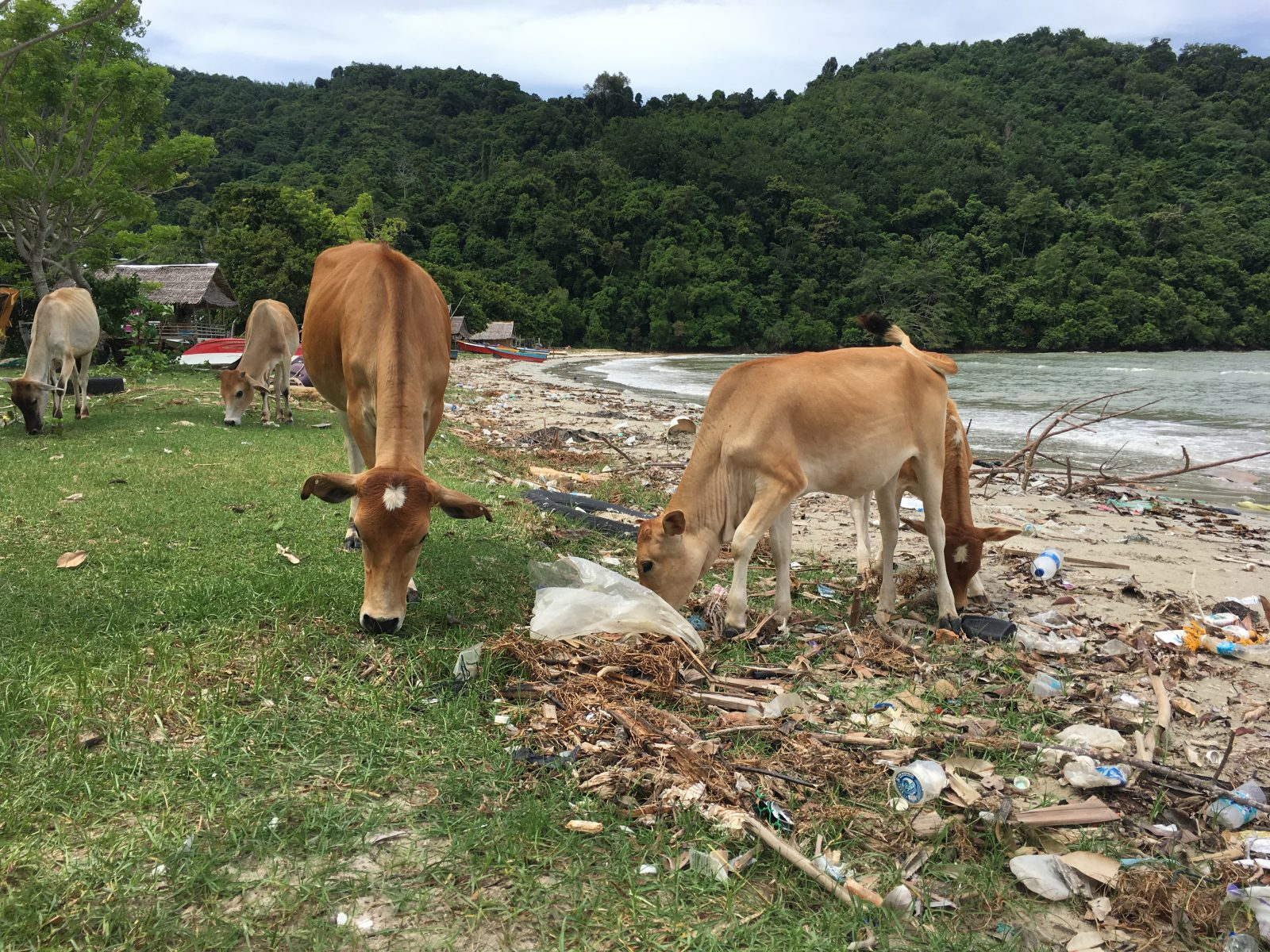 camps_international_ella_roch-perks_2018_the_effect_of_plastic