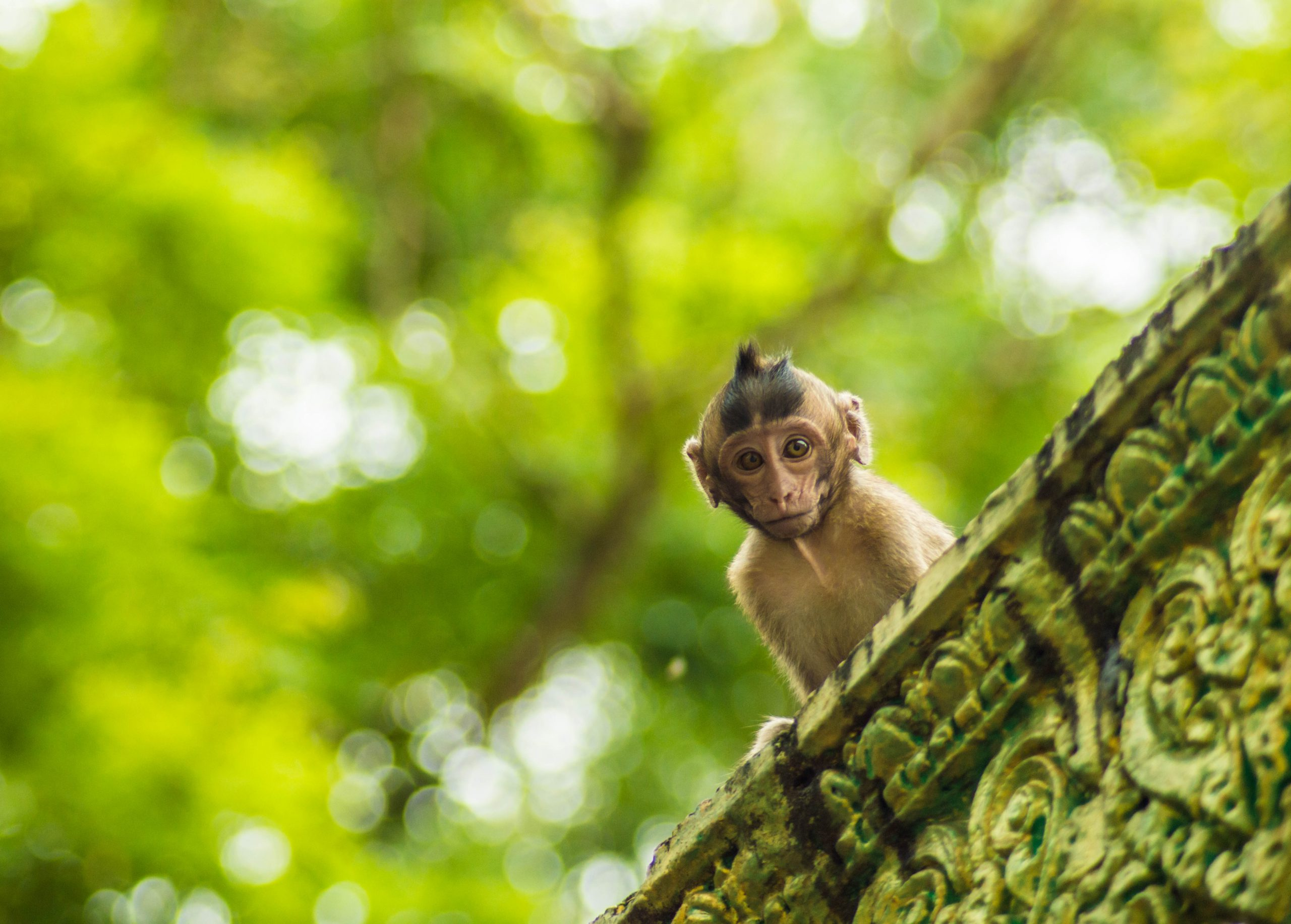camps_international_sam_mccready_2018_wildlife
