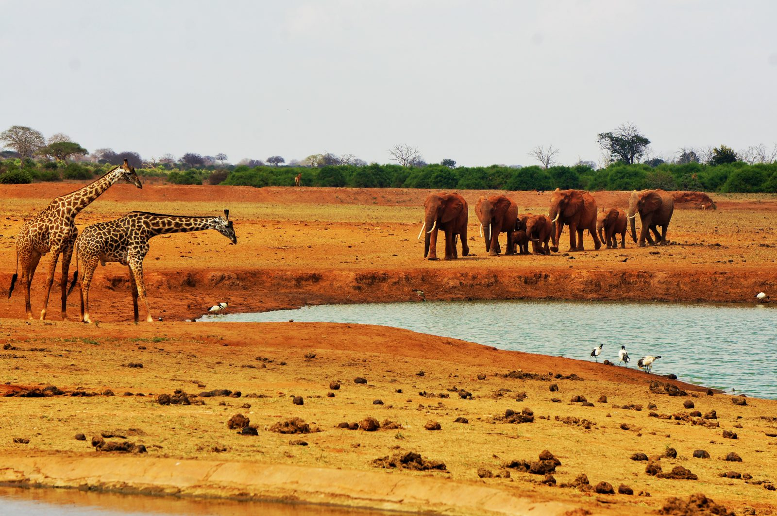 camps_international_unknown_photo_competition_2017_wildlife