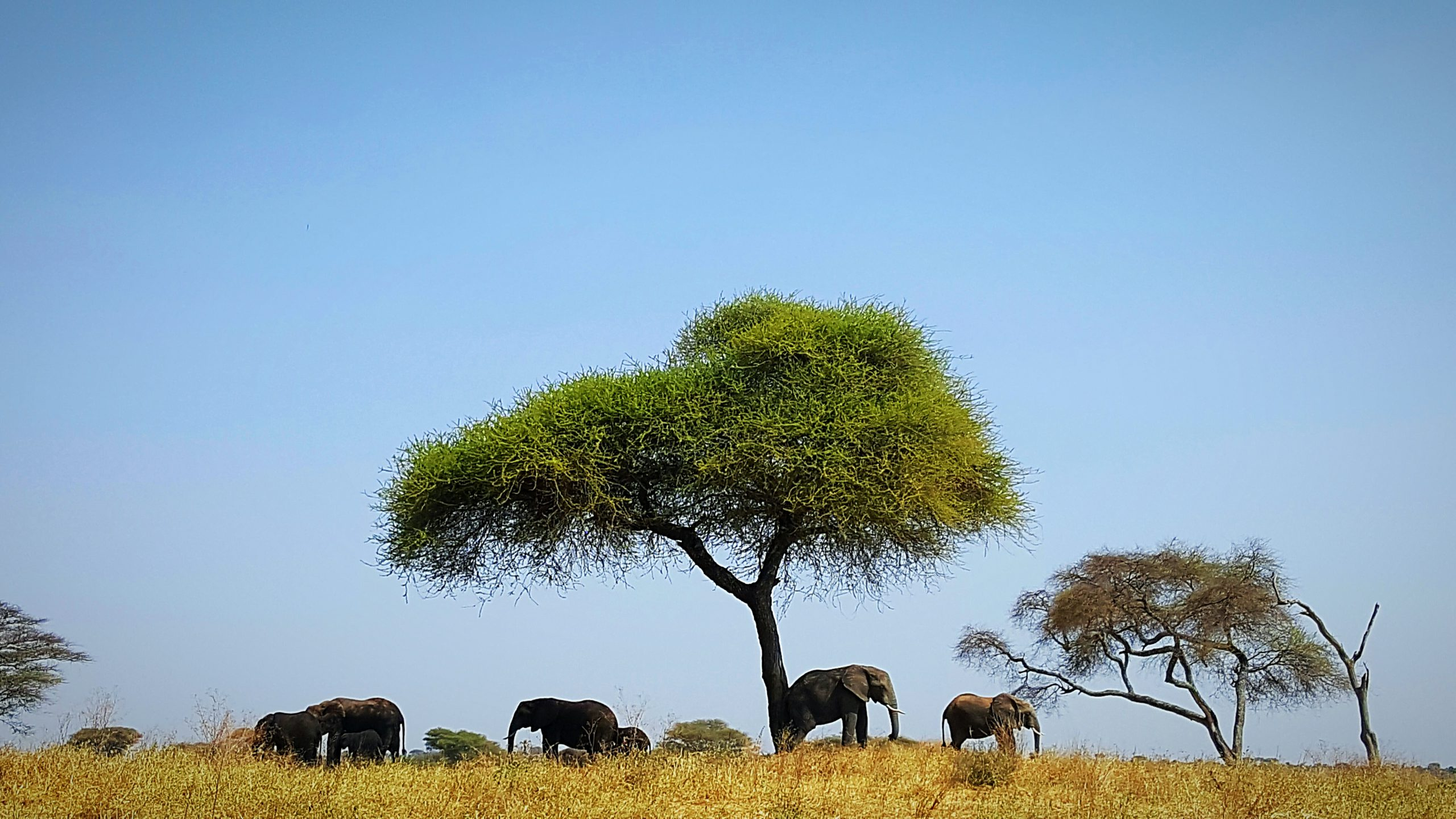 school_expedition_tanzania_trek_elephant_under_tree