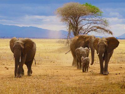school_expedition_tanzania_scuba_elephant_family
