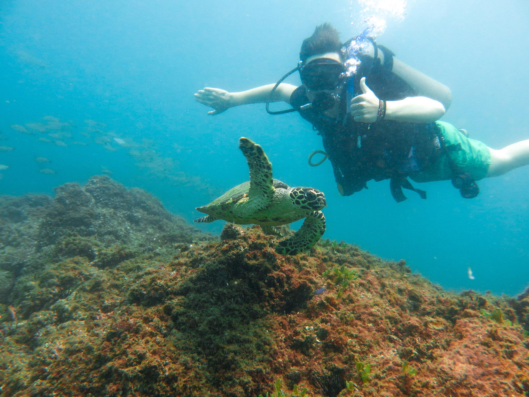 school_expedition_borneo_scuba_diving_turtle-2