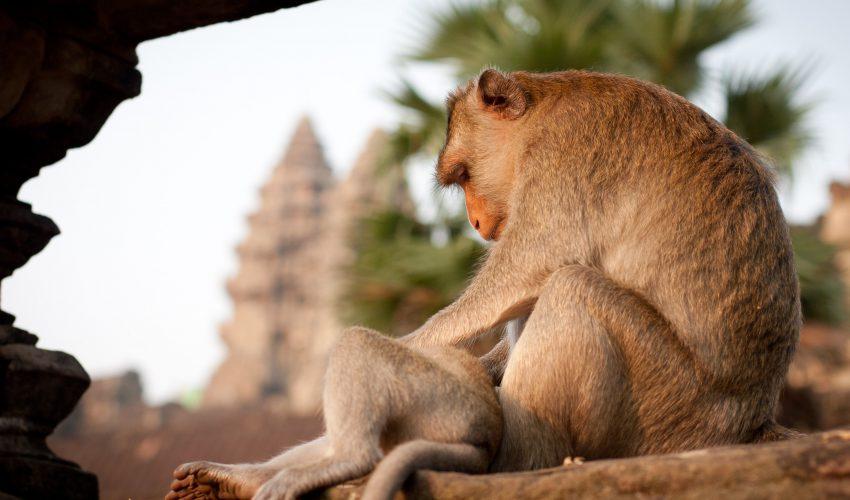 school_expedition_cambodia_scuba_monkey_at_temple