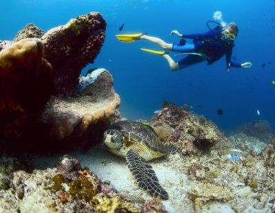 school_expedition_borneo_scuba_diving_turtle