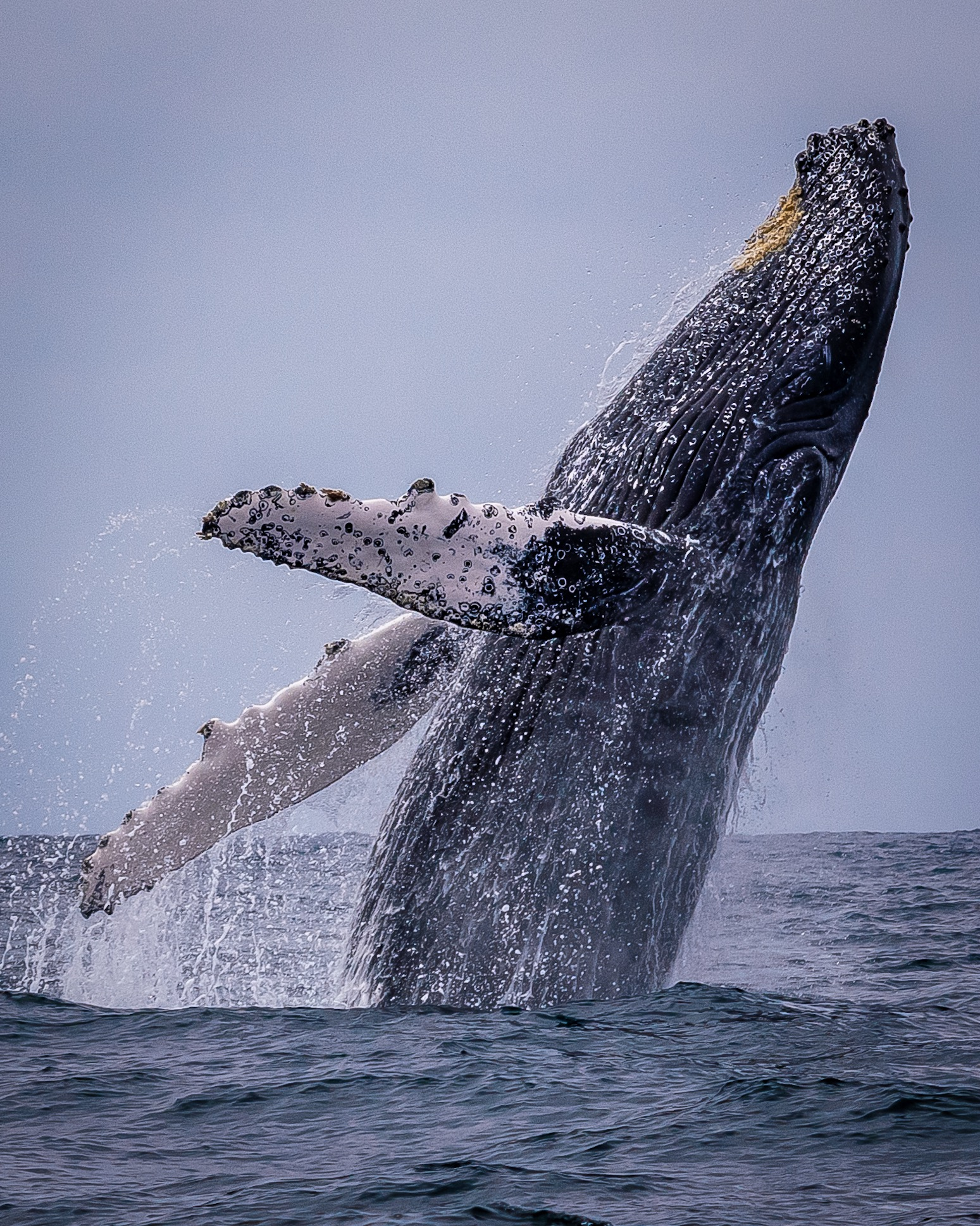 camps_international_rich_holt_humpback_whale