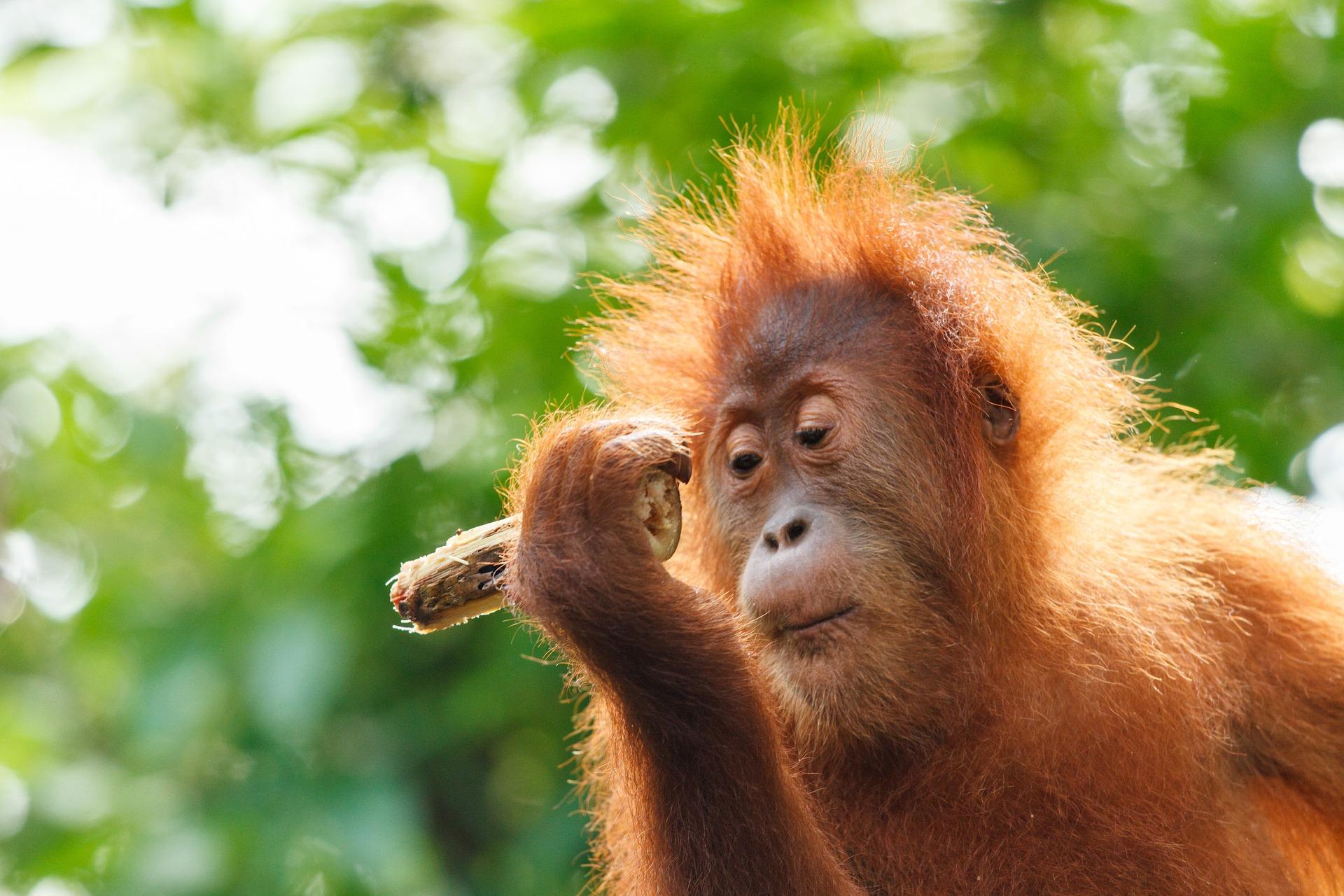 school_expedition_borneo_impact_baby_orangutan