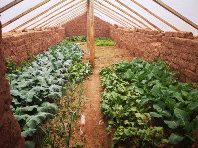 greenhouse-peru