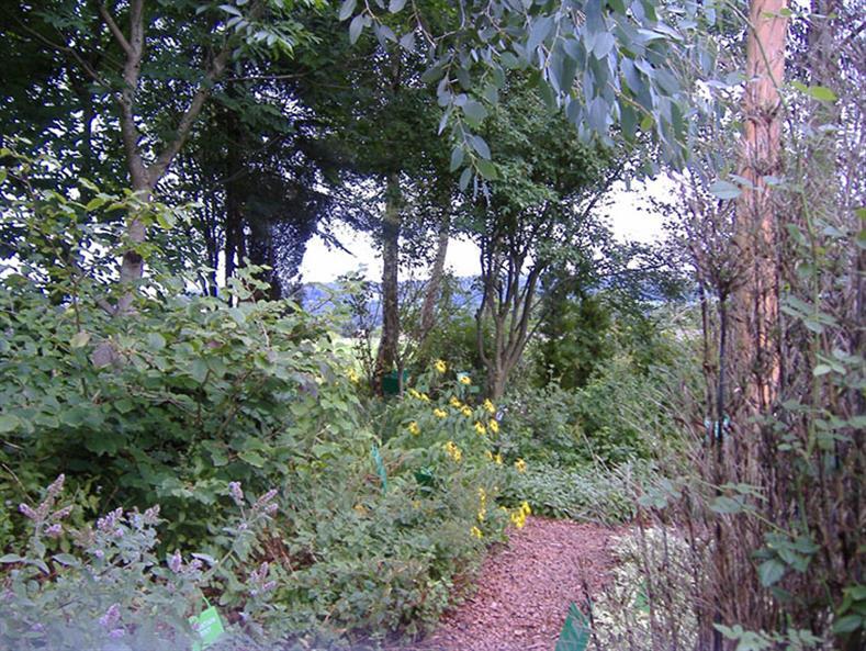 Dilston-Garden-2