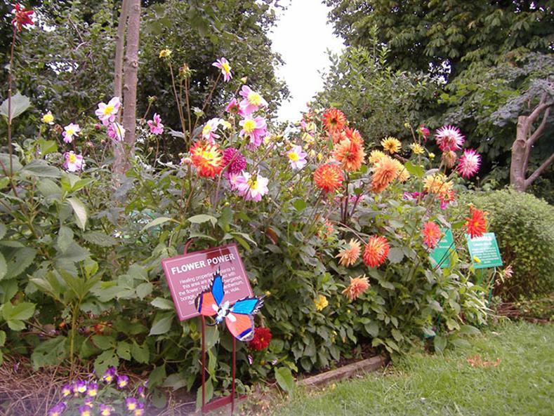 Dilston-Garden-5