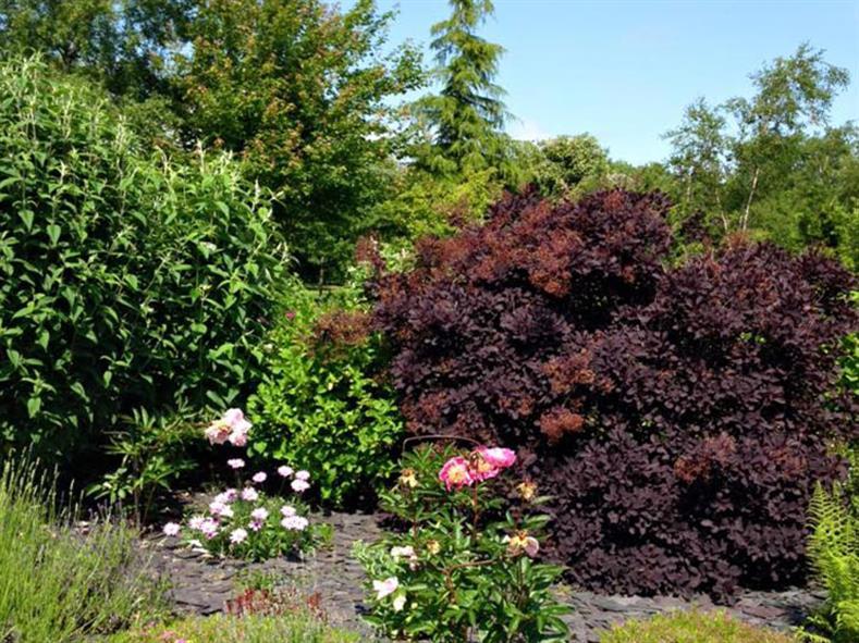 birkheads-garden-9
