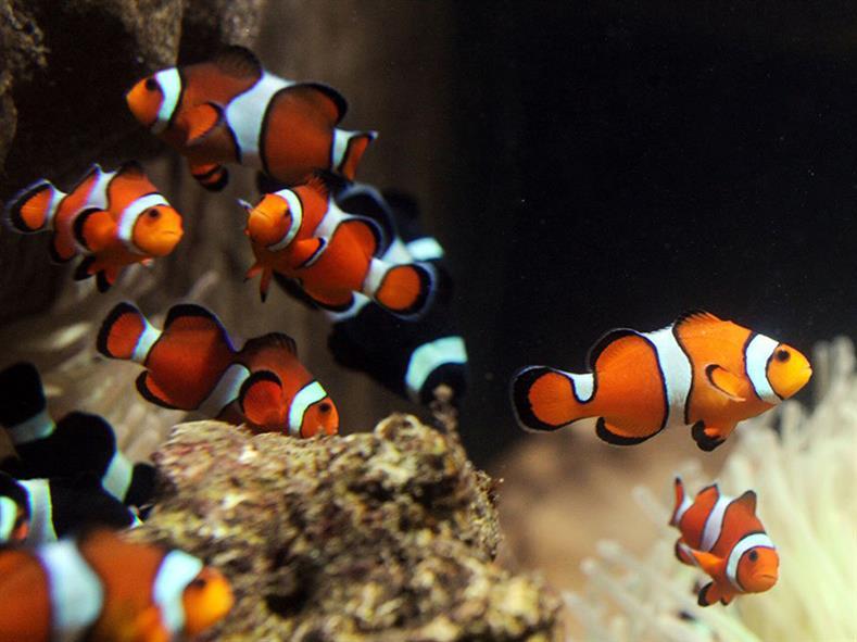 Aquarium-9