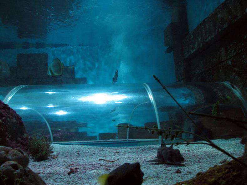 Aquarium-10