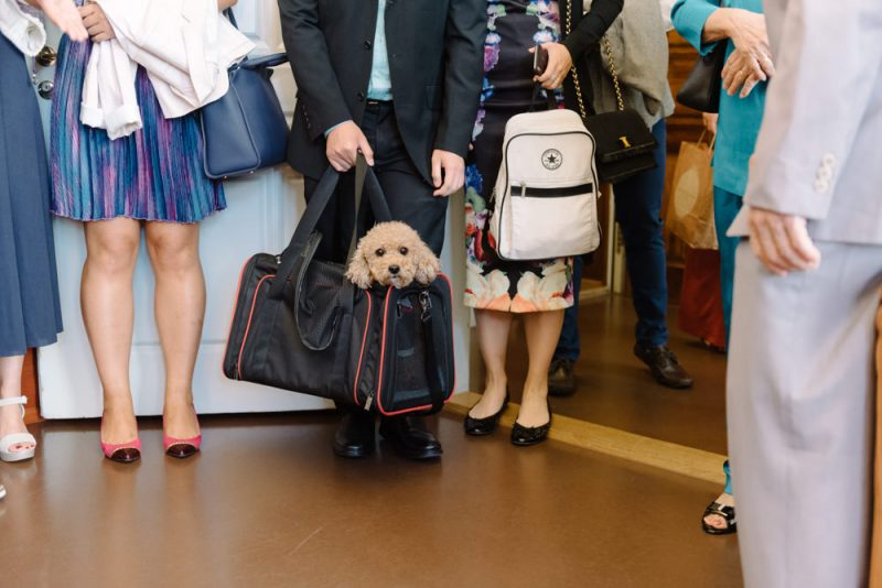 dog at a wedding in a bag at Zurich Stadthaus
