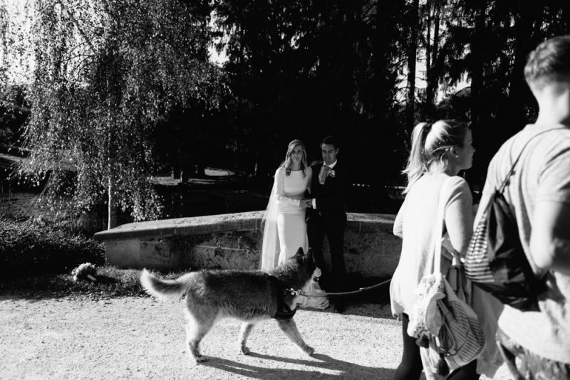 A bride and groom are posing for a portrait next to a bride and under some trees and another couple with a husky dog have just walking in front of them