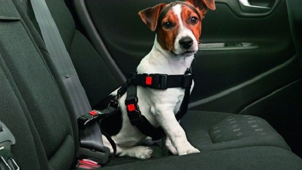 cane in auto