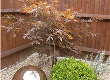 Garden Design Project - Solent Garden Services Ltd