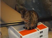 company cat