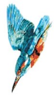 Kingfisher White Services Ltd