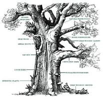 Clear Cut Trees Ltd