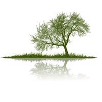 Dr Green Tree Surgeon