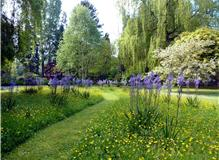 Woodland walk through wild flowers (camassia and buttercups)