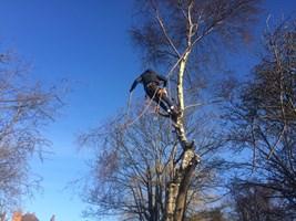 Ian Price Tree Care & Garden Services