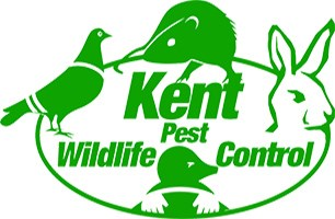 Kent Wildlife & Pest Control