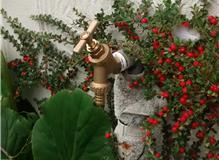 Garden tap, Little Dunmow.