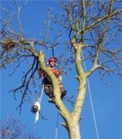 Tom Shaw Tree Surgeon