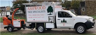 Ashwood Tree Specialist