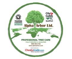 Alpha Arbor Ltd