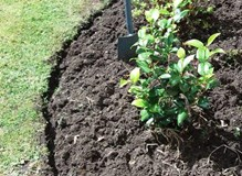 Planting and edging